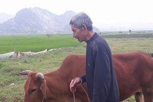 Vụ chăn trâu bò phải đóng tiền: 'Suy nghĩ tốt nhưng cách làm sai'