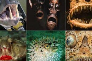 7 'quái vật' cá kỳ lạ, 'chất phát ngất' đáng sợ nhất hành tinh