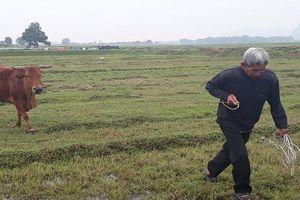 Vụ chăn trâu phải đóng phí cỏ: Chính quyền yêu cầu trả lại tiền cho dân