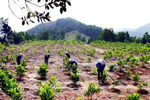 Trường hợp nào nhà đầu tư phải trồng rừng thay thế?