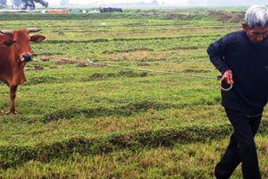 Đùn đẩy trách nhiệm xử lý HTX 'ép' dân đóng phí trâu, bò gặm cỏ