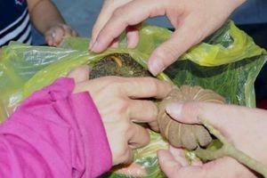 Ăn hạt quả ngô đồng, 7 học sinh nhập viện cấp cứu gấp