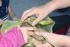 Vụ 6 học sinh ăn ngô đồng bị ngộ độc: Đã được xuất viện về nhà