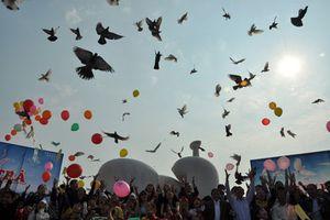 Bắc Ninh: Sắp tổ chức hội thi thả chim Bồ Câu