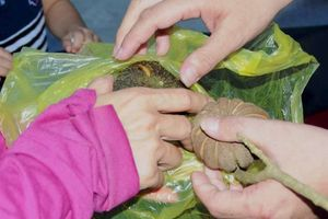 7 học sinh nhập viện cấp cứu vì ăn hạt cây vông đồng