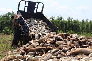 Thất thần nhìn cá chết trắng hồ ở Bình Phước