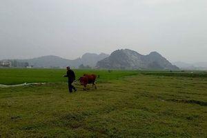 Bộ NN&PTNT lên tiếng vụ trâu bò ăn cỏ ở đồng phải đóng phí