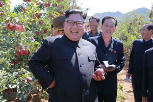 Hàn-Triều dỡ bỏ trạm gác biên giới, các lãnh đạo cùng trồng cây hòa bình