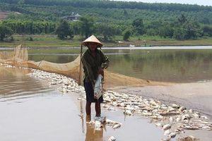 Hàng chục tấn cá đột nhiên chết hàng loạt, người dân đứng ngồi không yên