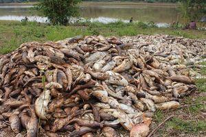 Ngư dân thiệt hại tiền tỷ vì 20 tấn cá chết ồ ạt