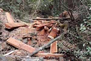 Bộ Công an bắt vụ phá rừng quy mô lớn tại Vườn Quốc gia Yok Đôn