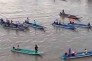 Cà Mau: Cá heo xuất hiện trên sông Bảy Háp