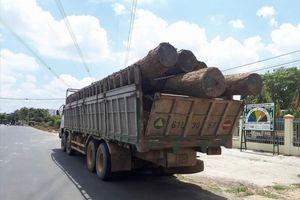 Bộ Công an bắt giữ số lượng lớn gỗ lậu trong vườn quốc gia Yok Đôn