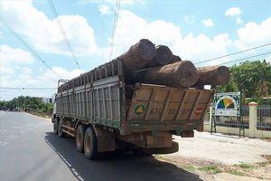 Bộ Công an mật phục bắt gỗ lậu cực lớn tại Vườn quốc gia Yok Đôn