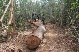 40 người đe dọa lực lượng chức năng cướp tang vật phá rừng