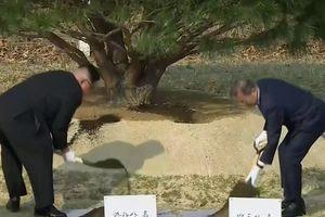 Ông Kim trở lại đất Hàn Quốc, cùng trồng cây với ông Moon