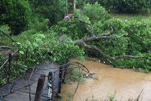 Lâm Đồng: Lốc xoáy kinh hoàng gây thiệt hại hàng tỷ đồng