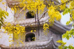 Nao lòng trước những con đường hoa vàng đẹp hút hồn dưới nắng Sài Gòn
