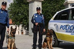 Cảnh sát bốn phương số 212
