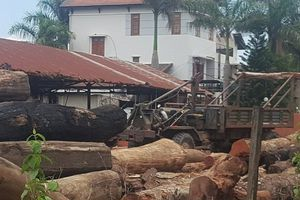 Đắk Nông: Bắt khẩn cấp đàn em thân cận của Phượng 'râu'