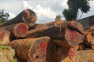 Cán bộ kiểm lâm nói gì về xưởng gỗ lậu của Phượng 'râu'?