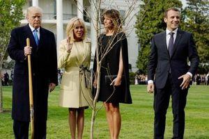 Hoa Kỳ: Cây sồi non hai Tổng thống Trump và Macron trồng ở Nhà Trắng vì sao biến mất?