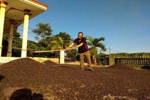 Chớm vào mùa mưa, giá cà phê khó có cơ hội tăng cao