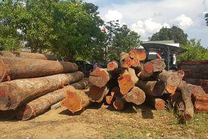 Phá đường dây gỗ lậu của Phượng 'râu': 4 cán bộ biên phòng bị đình chỉ công tác