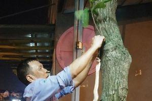 Hà Nội: Bắt được rắn hổ mang 'khủng' ở sân chơi chung cư Rice City