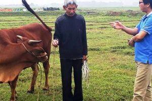 Vụ thu phí trâu, bò gặm cỏ: Chưa kiểm điểm làm rõ trách nhiệm