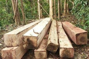 Rừng bị phá, tổ bảo vệ rừng báo cáo 'không bị xâm hại'