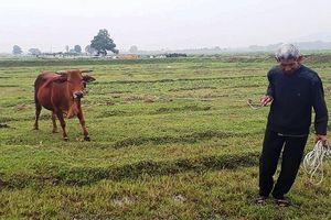 Kiểm điểm tập thể, cá nhân liên quan vụ phí 'trâu, bò ăn cỏ'