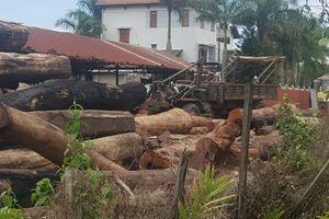 Vụ buôn gỗ lậu ở Đắk Nông: Đình chỉ 4 cán bộ biên phòng