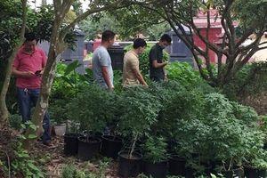 Bắt đối tượng trong 'Hội thánh đức Chúa trời' trồng gần 1.000 cây cần sa