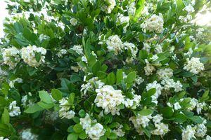 Nhà ngát hương thơm, không lo nấm mốc nếu trồng những loại cây này