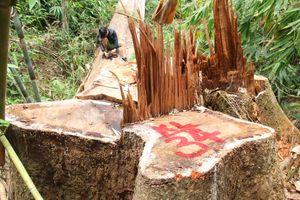 Quảng Nam: Kỷ luật 8 cán bộ kiểm lâm để xảy ra phá rừng