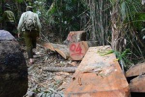 Cách chức Hạt trưởng kiểm lâm rừng phòng hộ