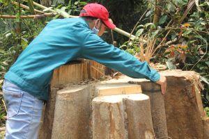 Để xảy ra hàng loạt vụ phá rừng, nhiều cán bộ kiểm lâm bị kỷ luật