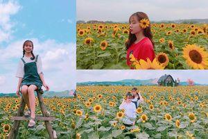 Ngỡ lạc chốn thiên đường với cánh đồng hoa hướng dương vàng rực ở Bắc Giang
