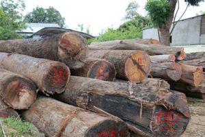 Vụ trùm gỗ lậu Phượng 'râu': Khởi tố vụ án và 5 đối tượng vận chuyển gỗ lậu