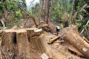 Phá rừng ở Quảng Nam: Thêm nhiều cán bộ Hạt Kiểm lâm bị kỷ luật