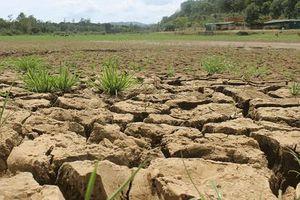 Người dân Bình Định 'khát' nước dùng trong nông nghiệp