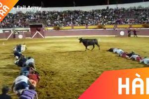 Màn đánh lừa chú bò của những đấu sĩ bò tót