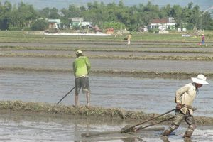 Bình Định: 7.600ha lúa hè thu có nguy cơ thiếu nước