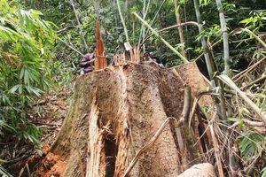 Để mất rừng, hàng loạt cán bộ kiểm lâm bị kỷ luật, cách chức