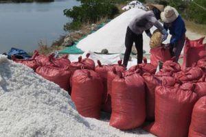 Phú Yên: 'Thảm cảnh' muối ế, đổ đống trắng bờ không ai mua