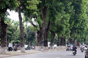 Dịch chuyển 175 cây xanh phục vụ thi công tuyến đường sắt Nhổn – Ga Hà Nội