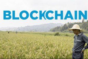 Blockchain và nông sản sạch cho người tiêu dùng