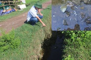 Người dân nghi nhà máy xả thải làm cá chết trên kênh N3