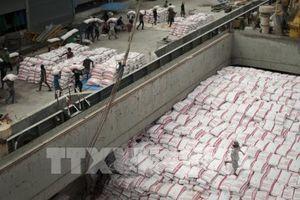 Chính phủ Thái Lan hỗ trợ tín dụng bình ổn giá gạo